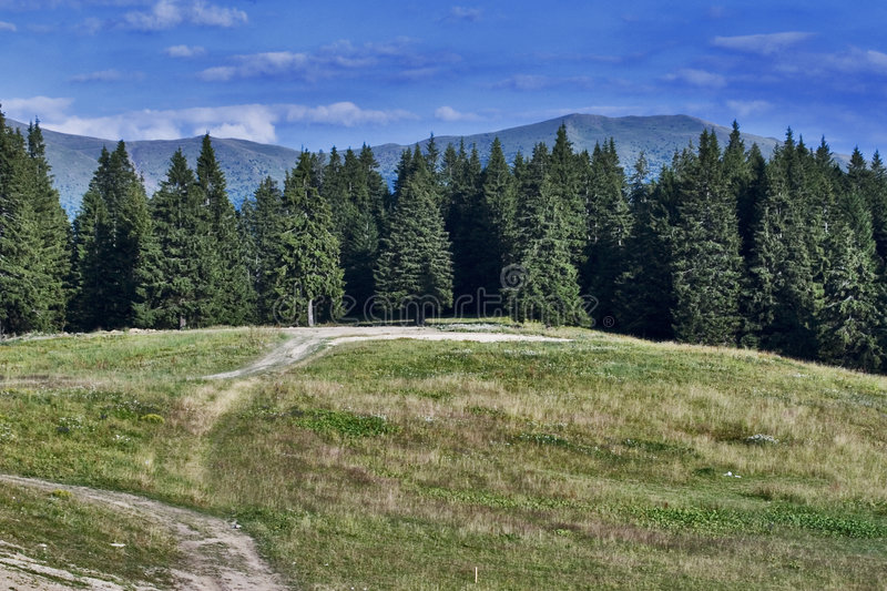 Mountain forest. With hill and path. Dramatic sky royalty free stock photos