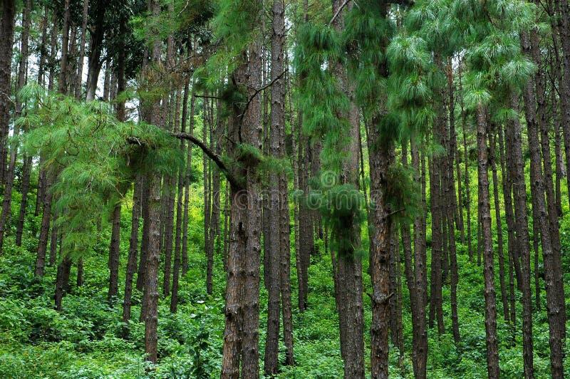 Mountain forest. stock photo