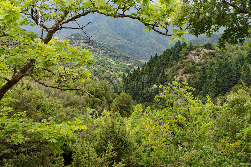 Mountain Forest. Dense foliage and trees in a Greek mountain forest, with views to olive trees in a valley royalty free stock image
