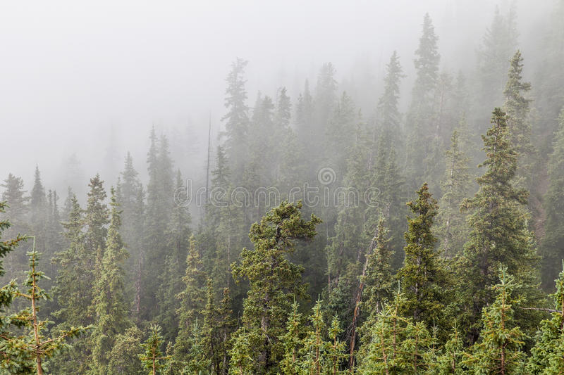 Download Mountain forest in fog stock photo. Image of spruce, forest - 29000834