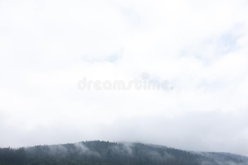 Mountain forest fog, pine tree landscape. Nature woods in mist. Copy space for text stock photos