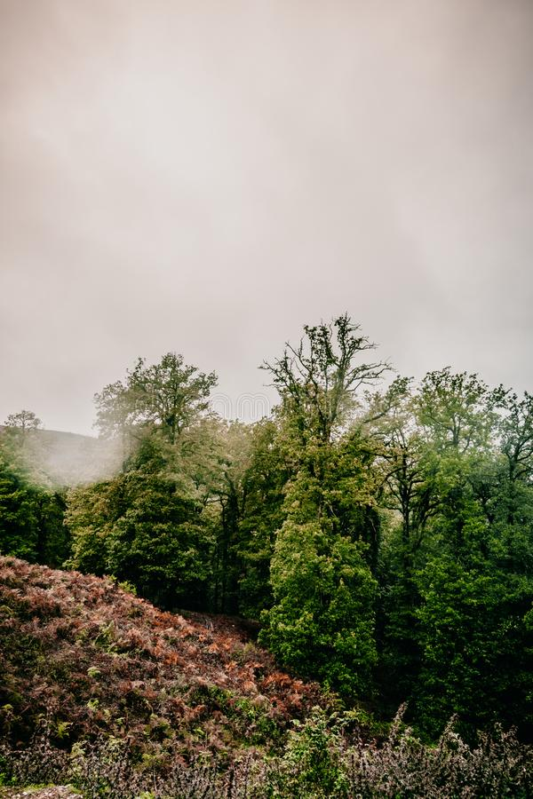 Africain countryside foggy straight road. Mountain forest, foggy day Annaba, Algeria in Africa.colorful leaves green trees stock images