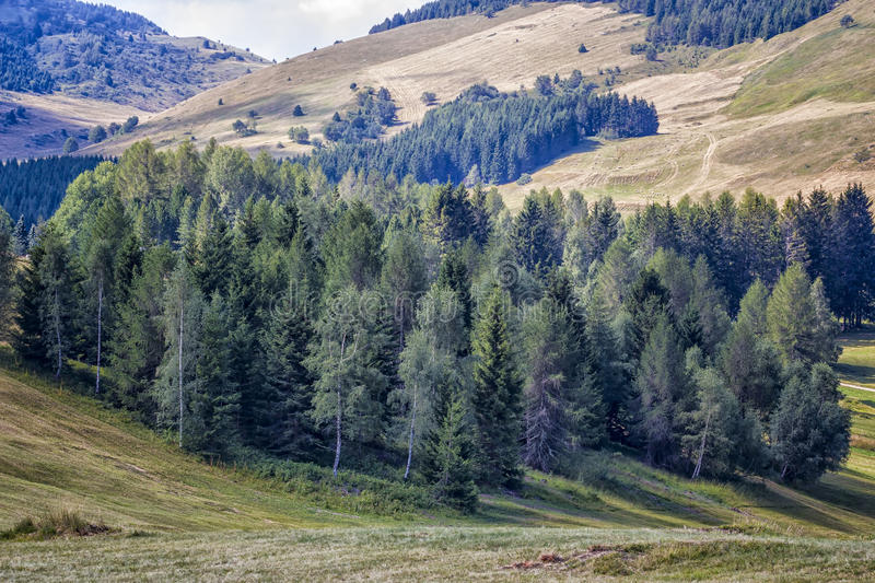Mountain Forest. Italy Stock Photo