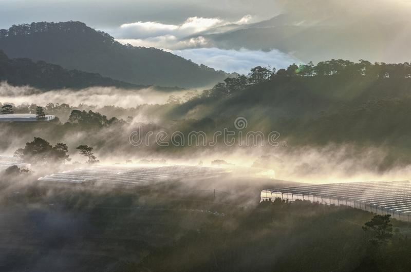 Mountain and forest landscape royalty free stock images