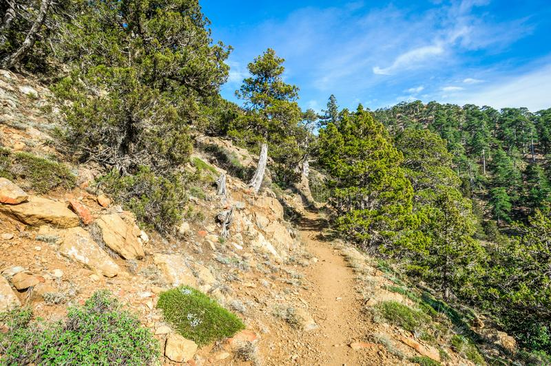 Mountain forest landscape, nature trail. Mountain forest landscape, Troodos touristn nature trail, Cyprus stock photos