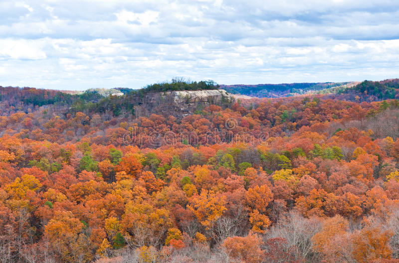 Mountain forest in late autumn royalty free stock photography