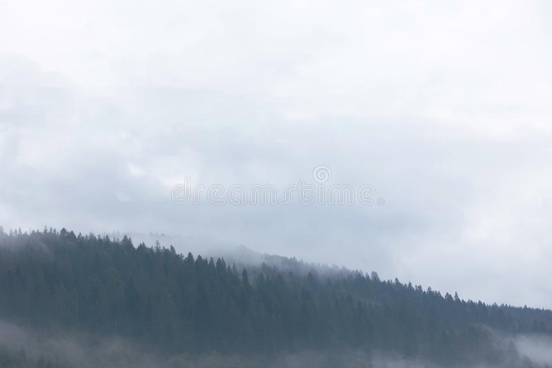 Mountain forest in mist, woods atmosphere. Beautiful ambience wild nature background royalty free stock image