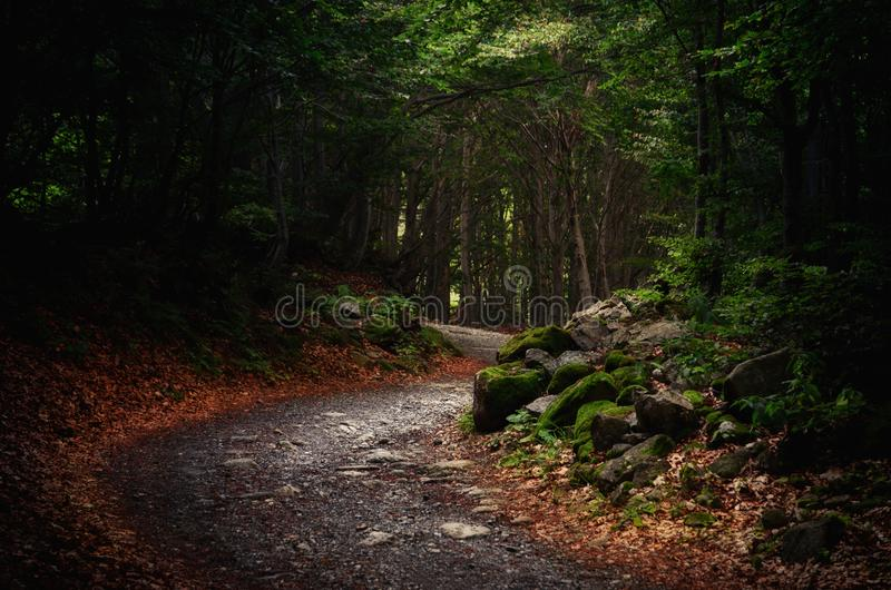 Mountain forest pathway. Pathway into an intricate wood with fallen leaves on the ground and stones stock photo
