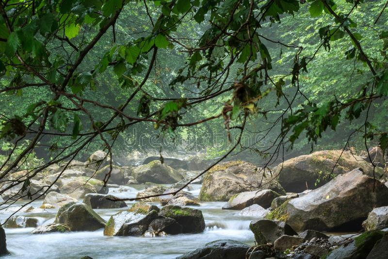 Mountain forest river royalty free stock photography