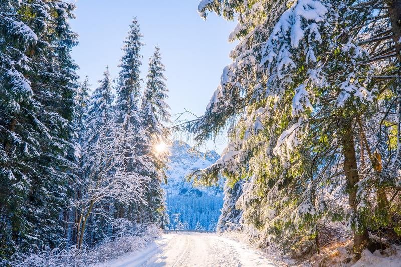 Mountain forest scenic landscape stock image