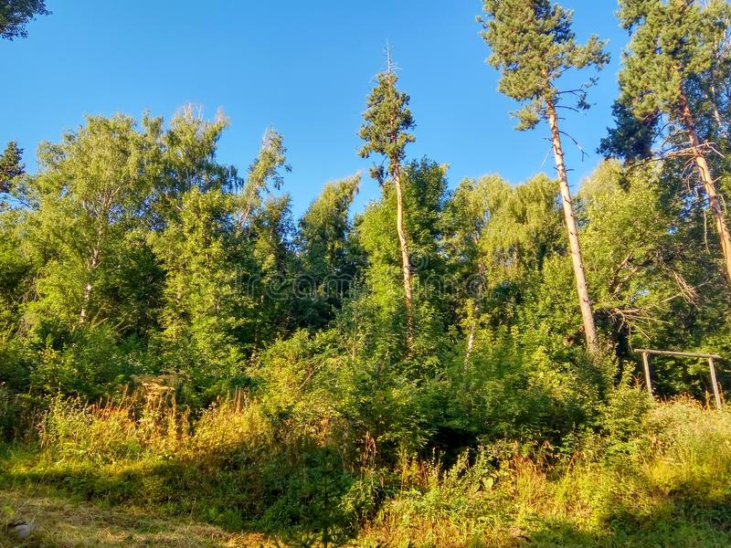 Mountain forest in Tien Shan stock images