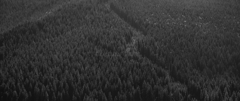 Mountain forest in Transylvania, near Sibiu, Romania royalty free stock photography