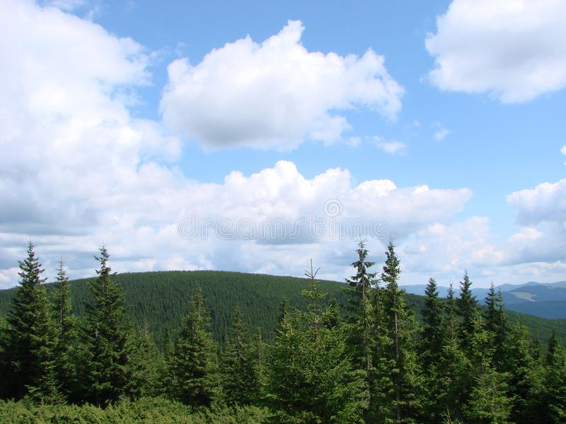 Mountain forest tree tops landscape. Mountain trees view. green valley panorama. Mountain forest tree tops landscape. trees view. Mountain green valley panorama stock image