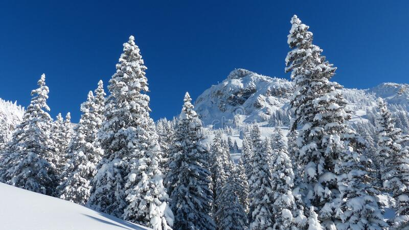 Mountain forest in winter stock images