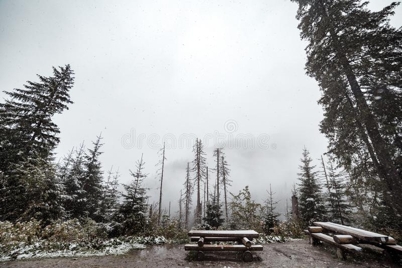 Mountain forest in winter. A place for recreation of tourists. Mountains in the background in the fog and in the snow royalty free stock photography