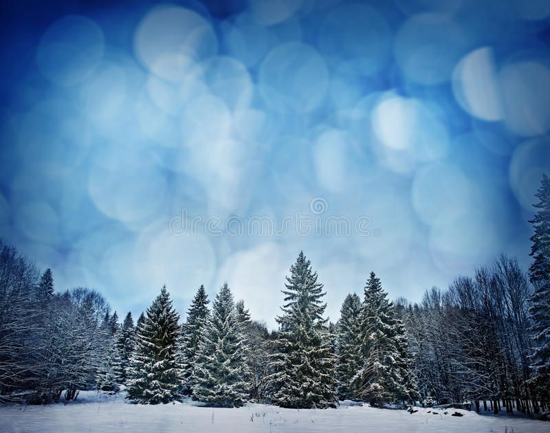 Mountain Forest In Wintertime Stock Images