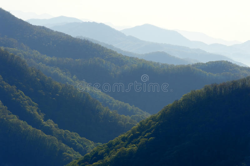 Download Mountain Forests stock photo. Image of peaks, mist, nature - 31369412