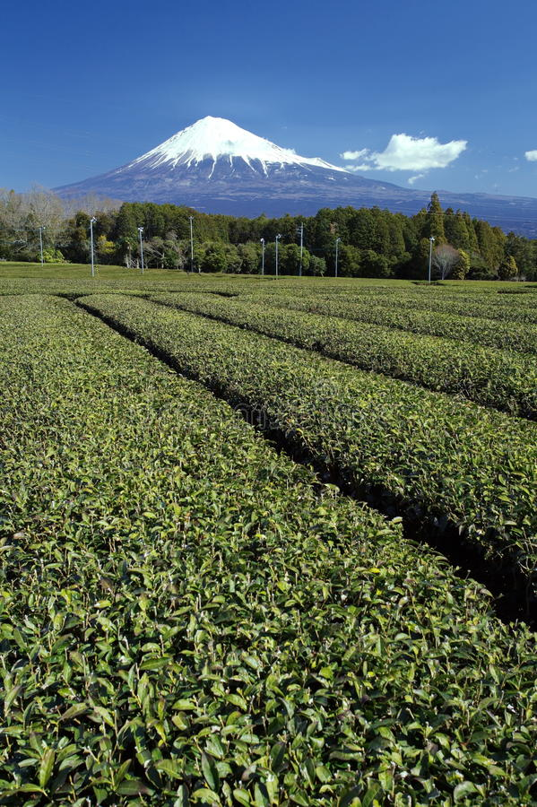 Download Mountain fuji stock image. Image of farm, harvest, color - 39511775