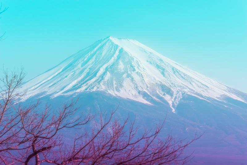 Mountain Fuji in winter framed by fall tree in blue color royalty free stock photography