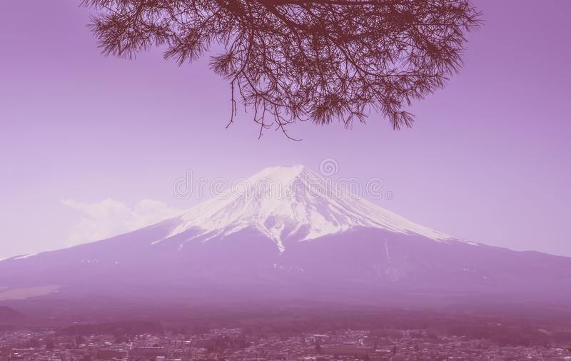 Fuji in winter framed by dry fall tree in pink color royalty free stock photography