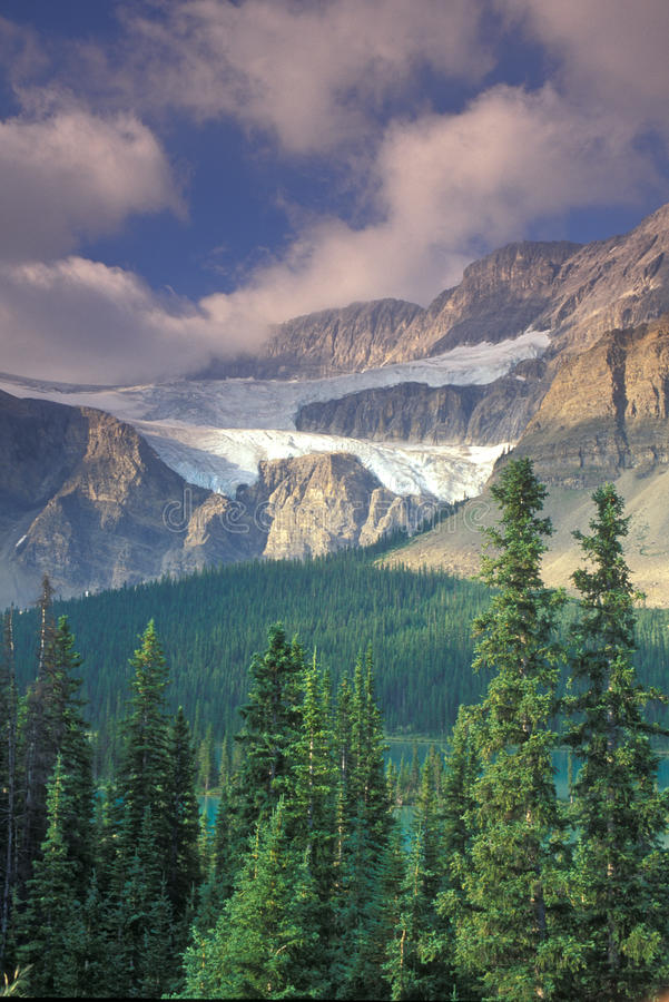 Mountain Glacier. A mountain glacier is situated between two mountains and above a forest royalty free stock image