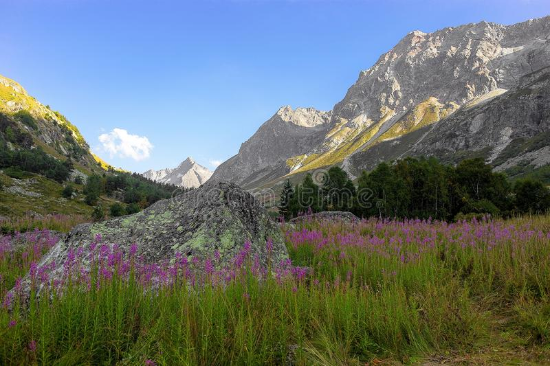 Mountain gorge with a meadow in the morning on the green grass and flowers surrounded by mountain peaks. In summer royalty free stock photos