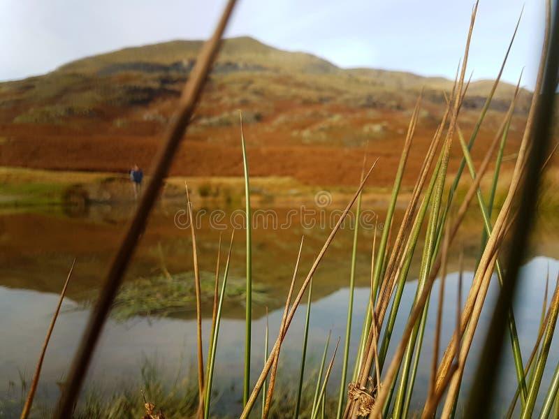 Mountain Through Grass royalty free stock images