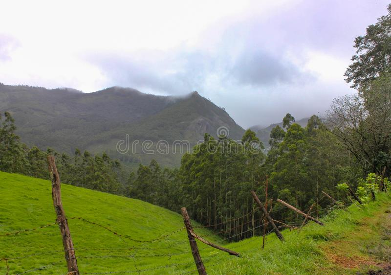 Mountain with green forest stock image