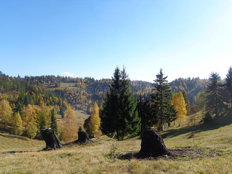 Mountain hay meadows with trees in Transylvania in the Gyimes region stock photography