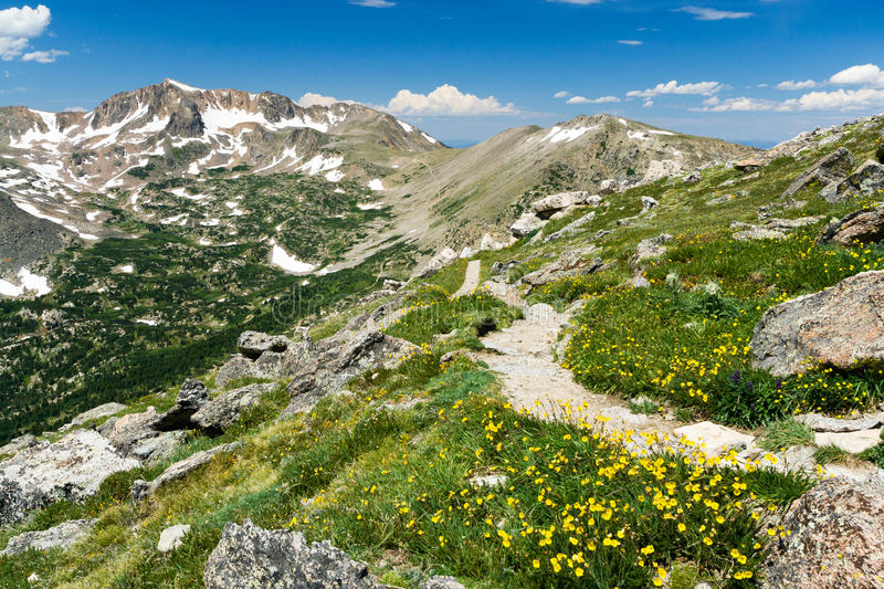 Download Mountain Hiking Trail Through Wildflowers Stock Image - Image of peaks, glacier: 25278039