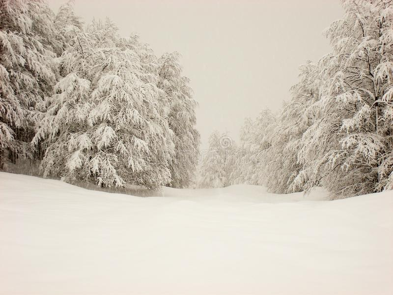Winter scene of smooth snow, and snow covered trees. Mountain hills with smooth soft blanket of snow and tree and pines covered with white snow royalty free stock images