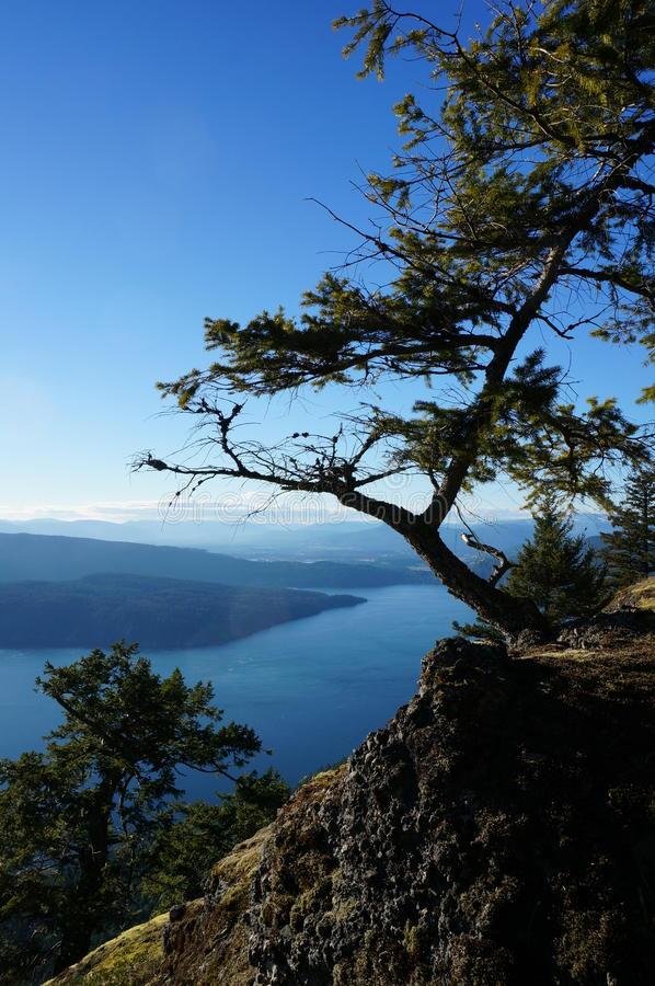 Mountain island vista with tree. Taken from the top of Mount Maxwell, Salt Spring Island, BC, Canada stock images