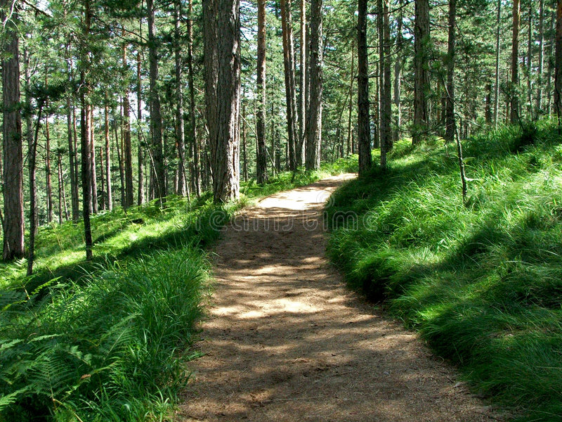 Download A Mountain Jogging Track In Tara Mountain Royalty Free Stock Photo - Image: 3093735
