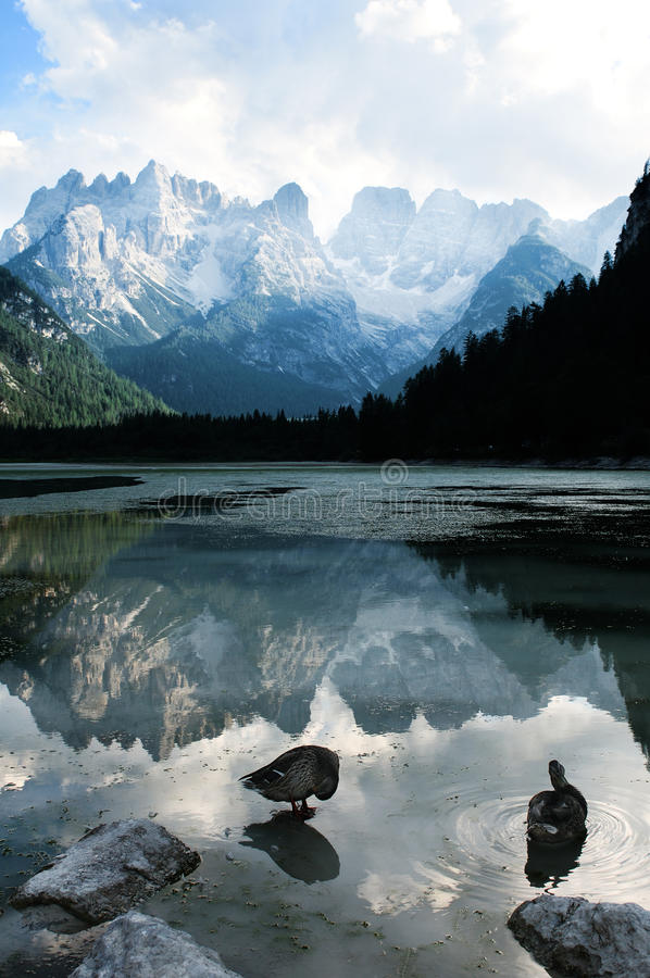 Mountain lake. In Alps (Italy royalty free stock image