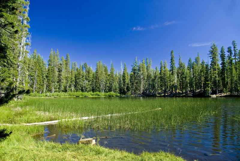 Mountain Lake and Meadow stock images