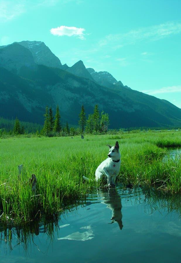 In the mountain lake shallows stock photo