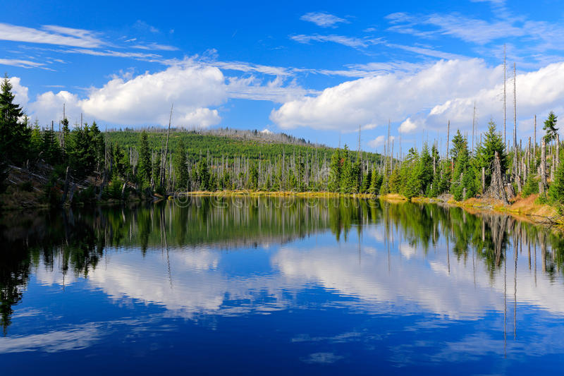 Mountain lake during summer day, devastated forest Bavarian Forest National Park. Beautiful landscape with blue sky and clouds, Ge stock photography