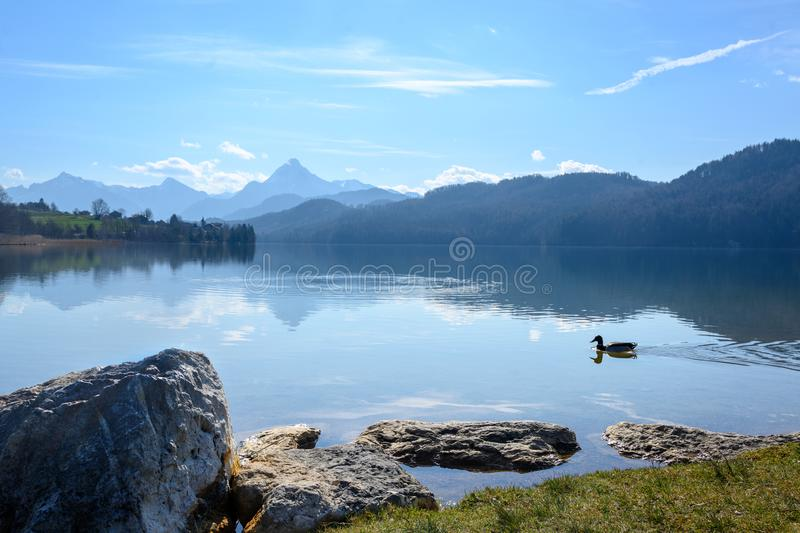 Mountain lake weissensee in morning light in front of the the bavarian alps near fuessen in the allgaeu, southern germany, copy royalty free stock image