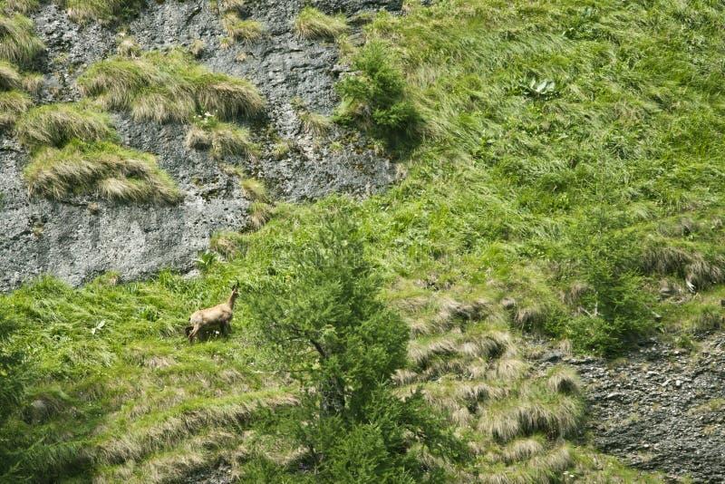 Download Mountain Landscape stock photo. Image of beautiful, heat - 15543708