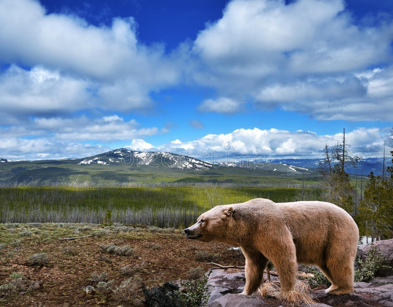 Mountain landscape with bear stock images