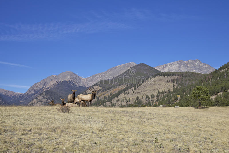 Mountain Landscape And Elk Royalty Free Stock Image