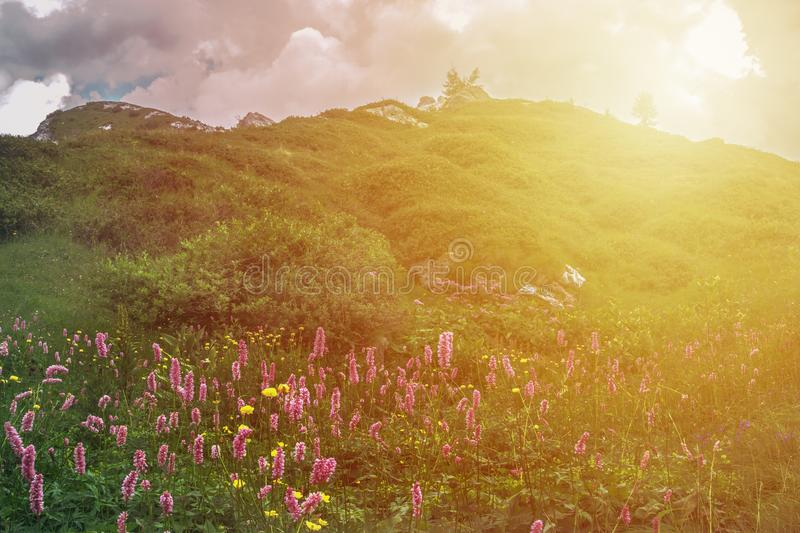 Mountain landscape with flawer and sunset in Valsabia, Italy royalty free stock image