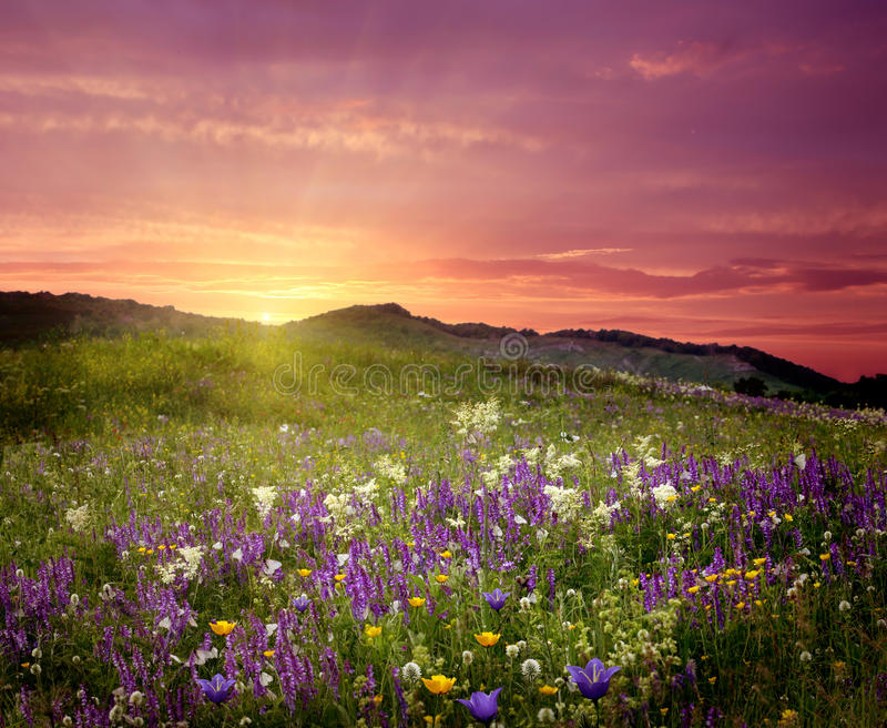 Mountain landscape with flowers royalty free stock photos