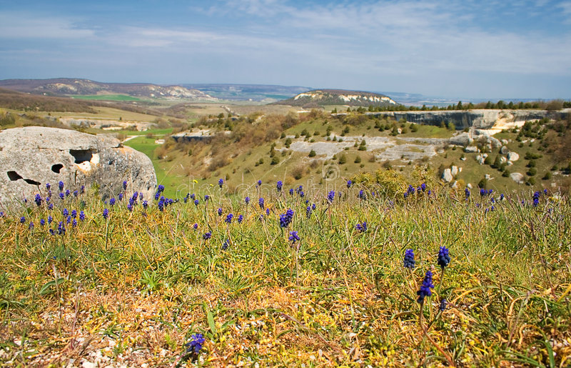 Mountain Landscape With Flowers Stock Photography