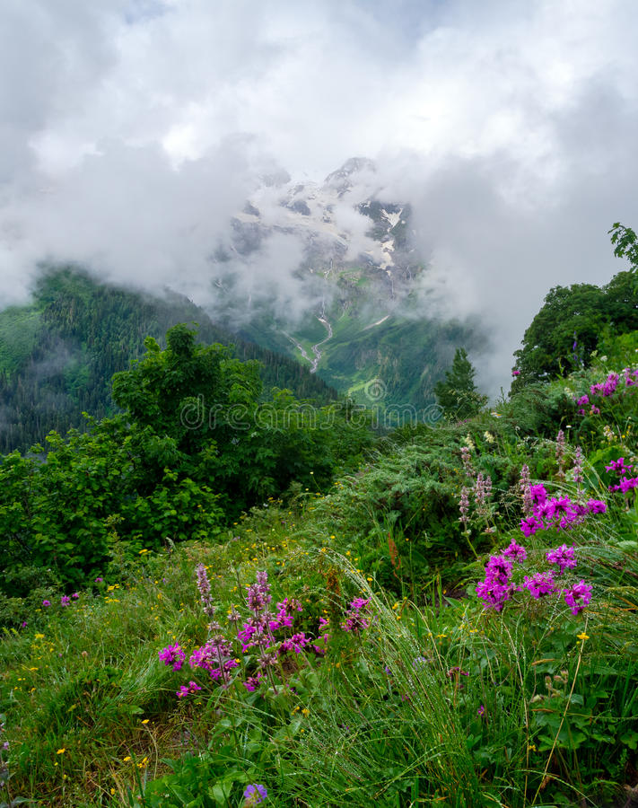 Mountain landscape with flowers on foreground