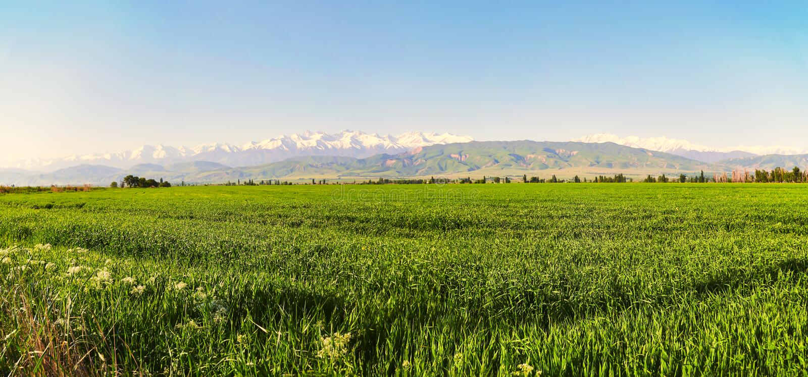 Mountain landscape. Fresh green meadows at sunrise in springtime, mountains lit by the rising sun. Panoramic view of the idyllic mountain landscape. Fresh green stock images