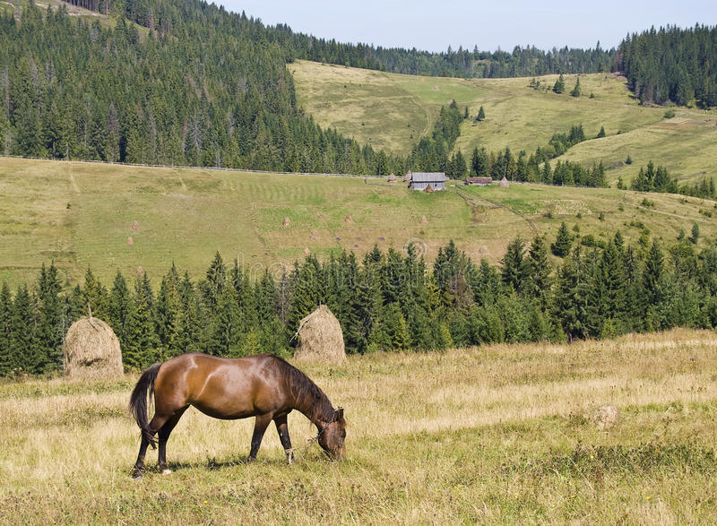 Download Mountain Landscape With A Horse Stock Photo - Image: 10615608