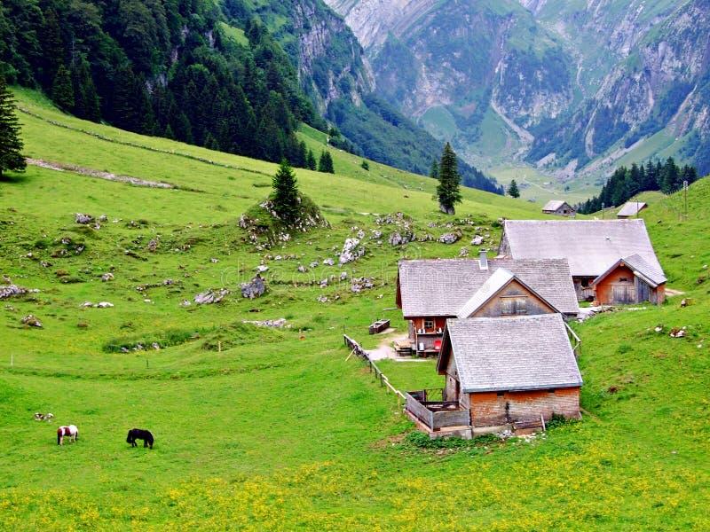 mountain, landscape, house, alps, mountains, nature, sky, switzerland, grass, green, valley, summer, meadow, village, alpine, hut, royalty free stock photo