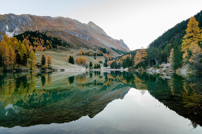 Mountain landscape and lake with fall color reflections and yellow larch trees. In the Alps if Switzerland royalty free stock photo