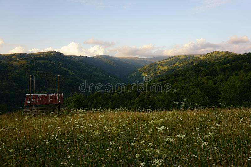 Mountain landscape from the meadow. Beautiful Carpathian mountain in the clouds. View in the summer time from the flowers meadow stock photo